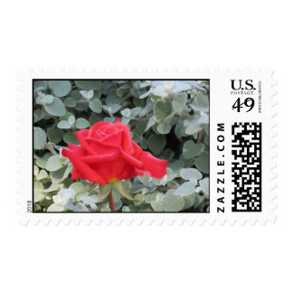 Rosa rojo en azulverde sello