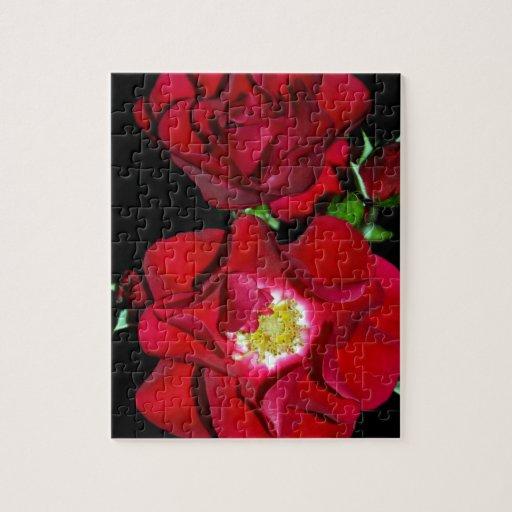 Rosa rojo en black.jpg puzzles con fotos
