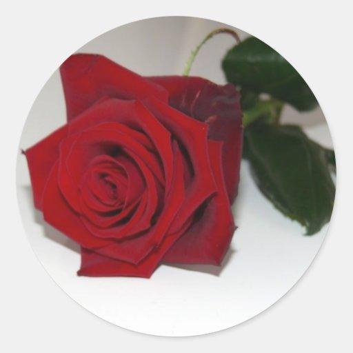 Rosa rojo en blanco pegatina redonda