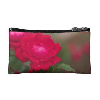 Rosa rojo en la floración con rocío de la mañana