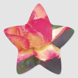 rosa rojo en la lluvia pegatina en forma de estrella