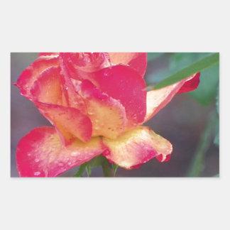 rosa rojo en la lluvia pegatina rectangular