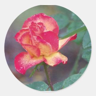 rosa rojo en la lluvia pegatina redonda