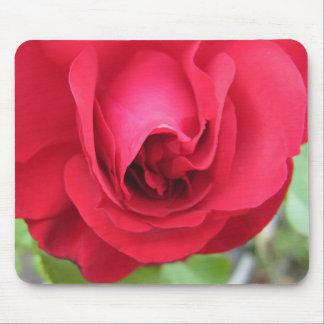 Rosa rojo en la plena floración tapetes de ratón