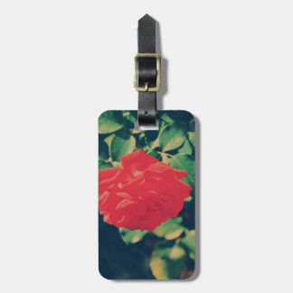 Rosa rojo etiqueta de equipaje