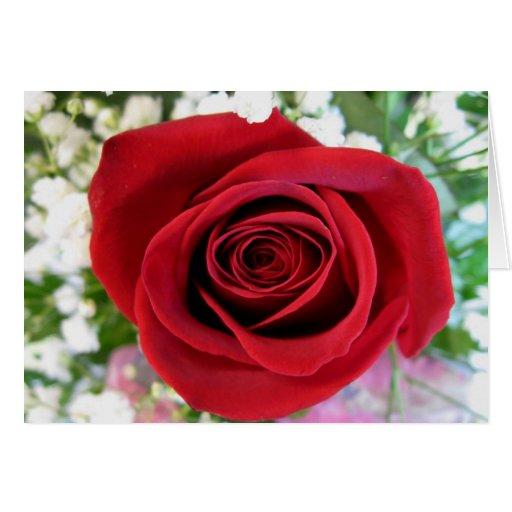 Rosa rojo felicitacion