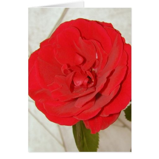 Rosa rojo feliz del día de madre II Tarjeta De Felicitación