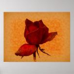 Rosa rojo floral impresiones