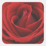 Rosa rojo floreciente calcomania cuadradas personalizada