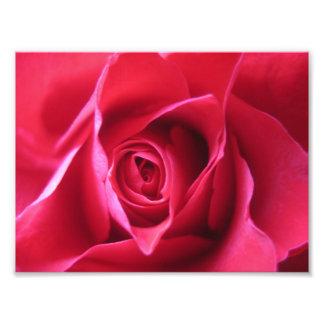 Rosa rojo impresiones fotograficas
