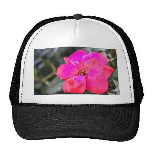 rosa rojo gorras