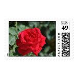 Rosa rojo hermoso franqueo