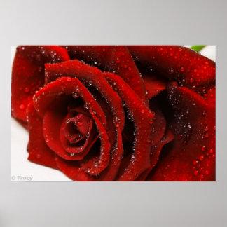 Rosa rojo hermoso posters