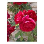 Rosa rojo hermoso postal