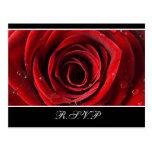Rosa rojo hermoso que casa RSVP - negro Postales