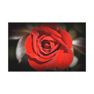 Rosa rojo impresión en lienzo