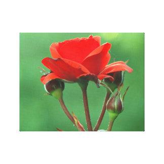 Rosa rojo impresión en lienzo estirada