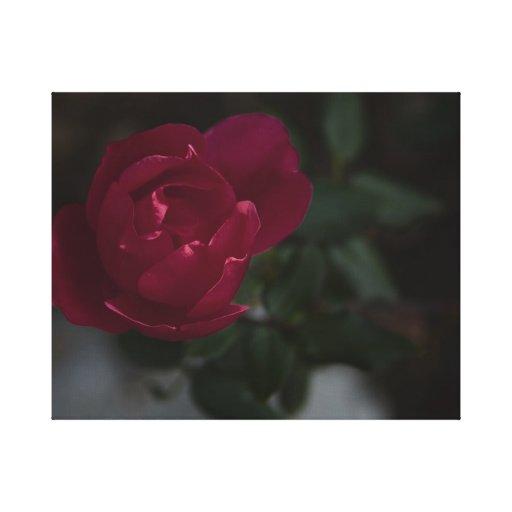 Rosa rojo impresión en lona estirada