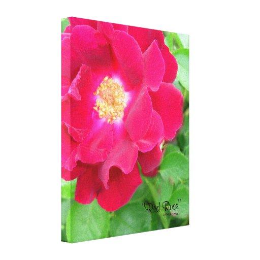 Rosa rojo impresiones en lienzo estiradas