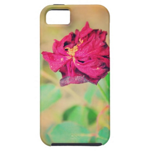 Rosa rojo iPhone 5 fundas