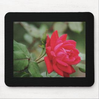 Rosa rojo lleno tapetes de ratón