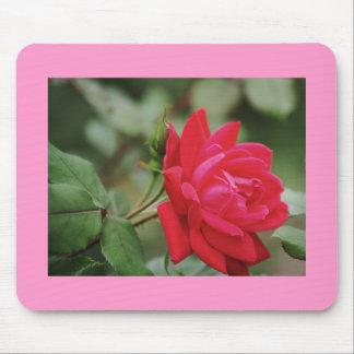 Rosa rojo lleno tapete de ratón
