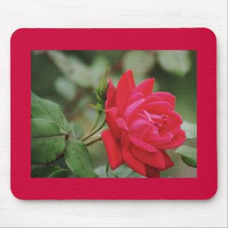 Rosa rojo lleno tapete de raton