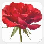 Rosa rojo - los rosas modificaron la plantilla pegatinas cuadradases personalizadas