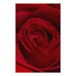 Rosa rojo magnífico papelería