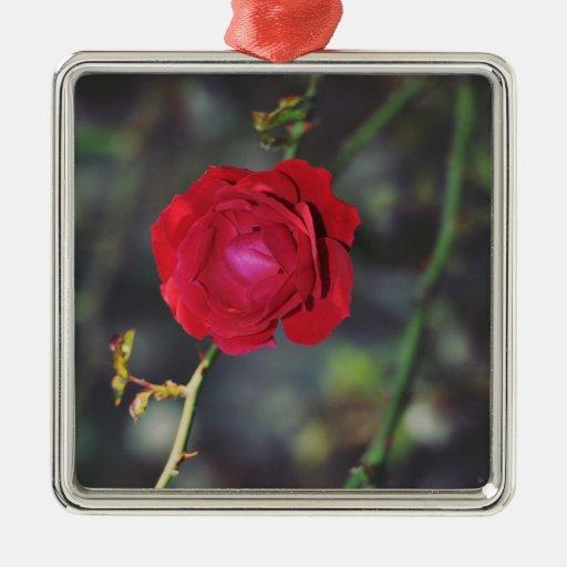 Rosa rojo ornamentos para reyes magos