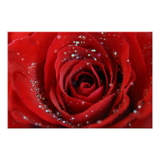 Rosa rojo poster