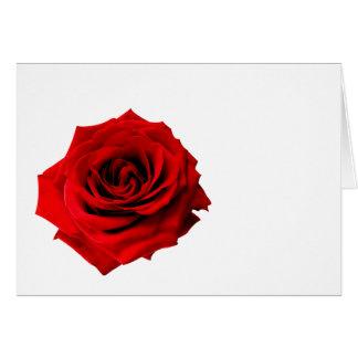 Rosa rojo para usted tarjetón