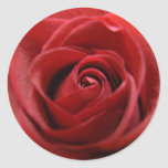 Rosa rojo pegatina redonda