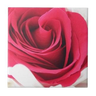 Rosa rojo perfecto azulejo cuadrado pequeño