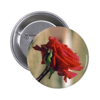 Rosa rojo pin