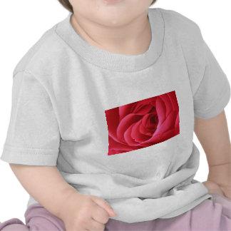 Rosa rojo camisetas
