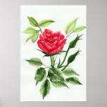Rosa rojo póster