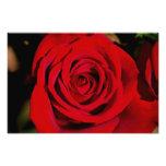 Rosa rojo romántico impresión fotográfica