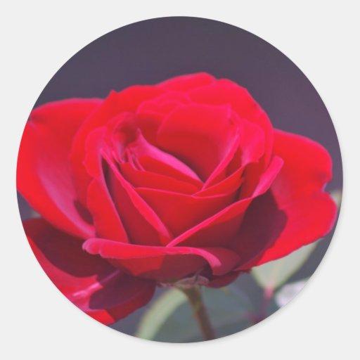 Rosa rojo romántico y significado pegatina redonda