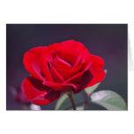 Rosa rojo romántico y significado tarjeta de felicitación