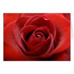 Rosa rojo tarjetas