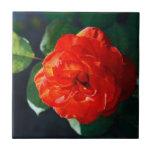 Rosa rojo teja