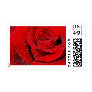 Rosa rojo timbre postal