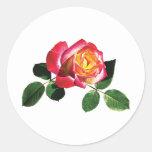 Rosa rojo y amarillo etiqueta redonda
