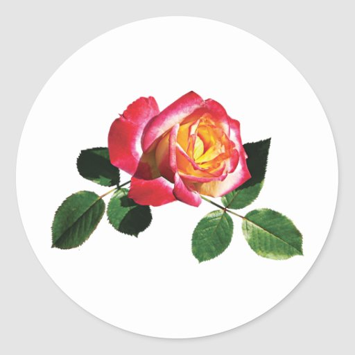 Rosa rojo y amarillo pegatina redonda