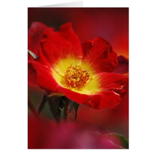 Rosa rojo y amarillo tarjeta de felicitación