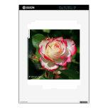 Rosa rojo y blanco calcomanía para iPad 2