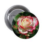 Rosa rojo y blanco pin
