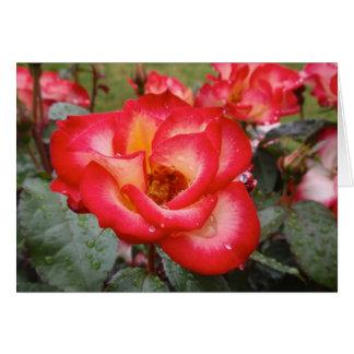 Rosa rojo y blanco tarjeta de felicitación