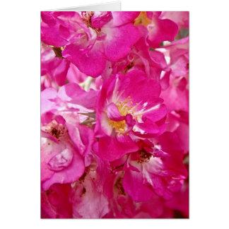 Rosa Rosa Rosam Card